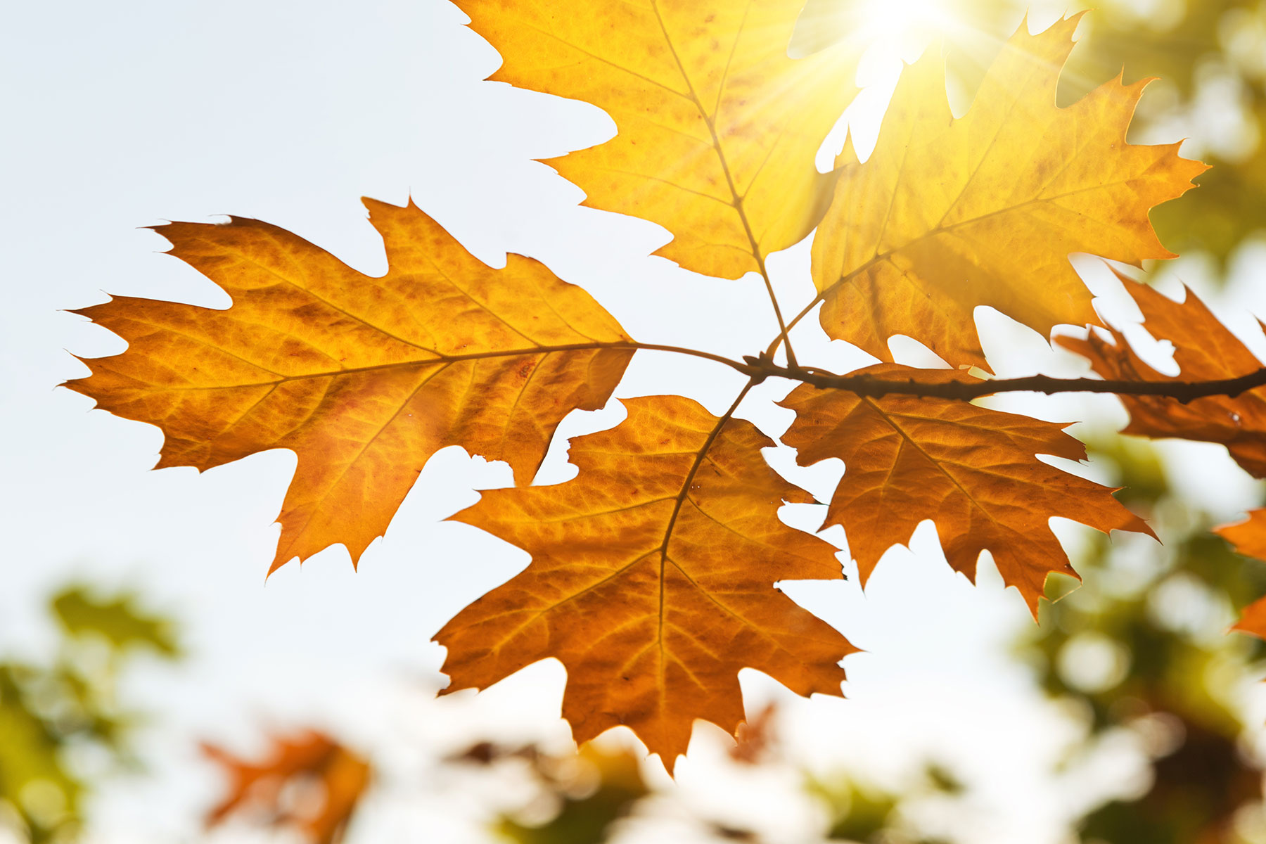 autumn-leaves-in-the-sun-of-light